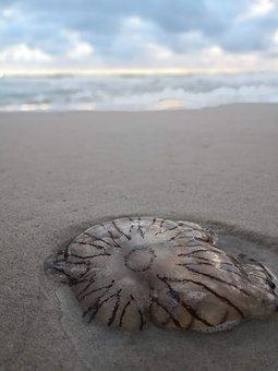 Jellyfish, Sand, Sky, North Sea, Sea, Ocean