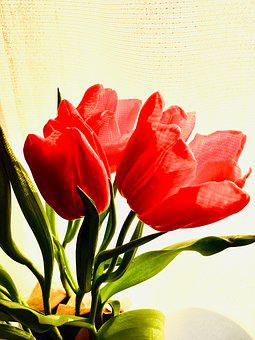 Tulips, Red, Pink, Flowers, Spring