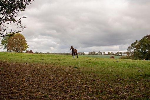 Horse, Reiter, Portrait, Nature, Thoroughbred, Animal