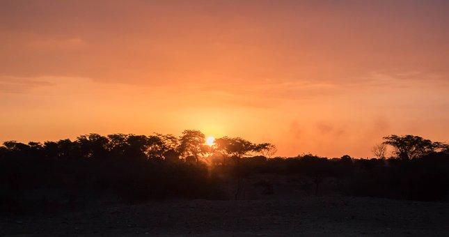 Sunset, Trees, Nature, Sky, Landscape, Tree, Light