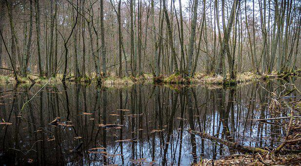 Nature, Swamp, Landscape, Water, Forest, Trees