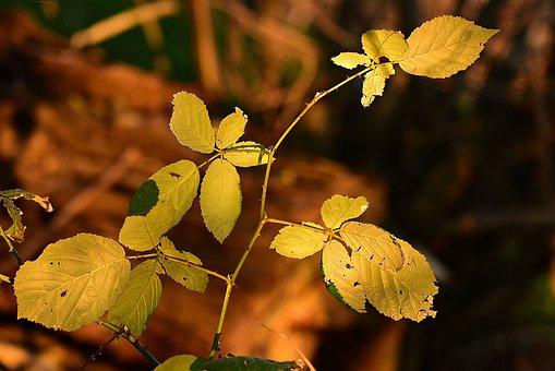 Leaf, Foliage, Twig, Bush, Autumn Color, Yellow, Vein