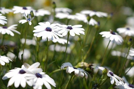 White Flowers, Flowers, Spring, White, Garden, Blossom