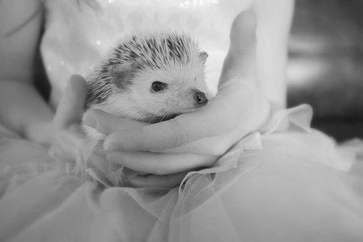 Hedgehog, Cute, Animal, Nocturnal, Prickly, Spur