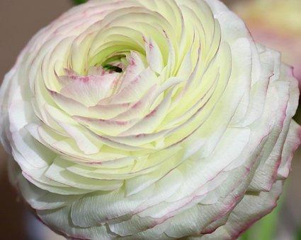 Flower, White, Bloom, Flowers, Spring, Flora, Garden