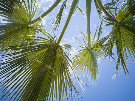 Palm, Tree, Leaves, Green, Nature, Forest, Botanical