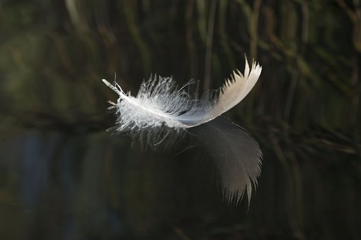 Feather, Water, Lake, Brine, Plumage, Nature