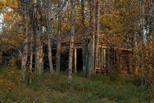 Abandoned, Cabin, Wood, Rustic, Shack, Old, Rural, Fall