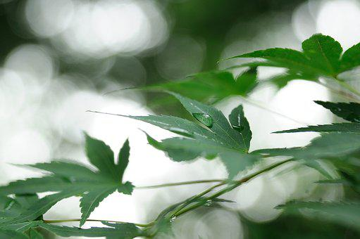 Nature, The Leaves, Abstract, Fresh Medium, Comfortable
