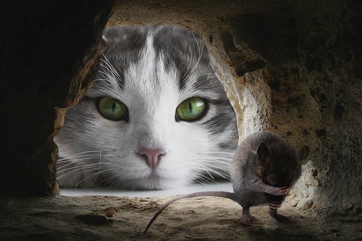 Cat, Mouse, Hunting, Cute, Animal, Lurking, Funny