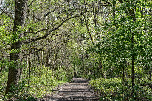 Forest Path, Forest, Green, Spring, Nature, Away, Path