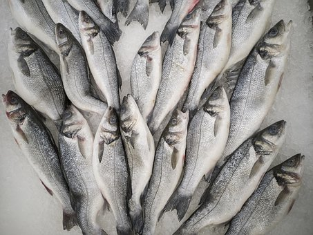 Fish, Fresh, Food, Healthy, Delicious, Kitchen, Raw