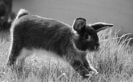 Rabbit, Bunny, Nature, Jump, Easter, Cute, Animal