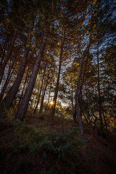 Forest, Dawn, Sun, Landscape, Tree, Nature, Trees, Sky