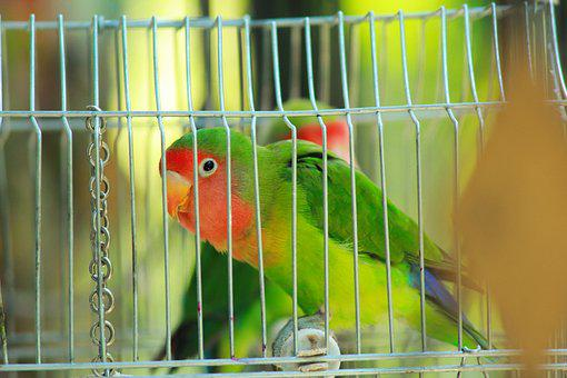 Parrot, Bird, Lovebird, Ara, Plumage, Exotic, Nature