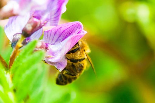 Bee, Flower, Blossom, Bloom, Insect, Pollen, Nature