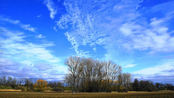 Landscape, Trees, Grove Of Trees, Nature, Sky, Blue