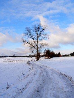 Snow, Landscape, Village, Nature, Winter, Tree, Sky