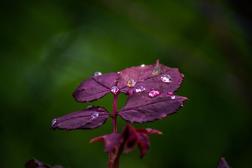 Drop, Plants, Nature, Flower, Garden, Dew, Water, Green