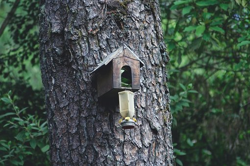 Forests, House Of Birds, Birdhouse, Wood, Tree, Nidal
