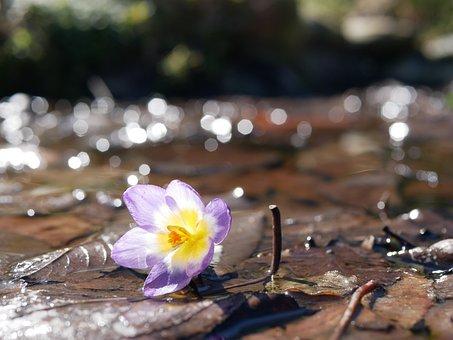 Spring, Flowers, Flower, Background, Cosmos, Field