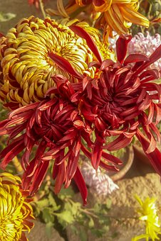Flower, Nature, Blossom, Summer, Spring, Garden, Flora