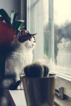 Window, Cat, Animals, The Window Sill, Cute, Cozy, Cats