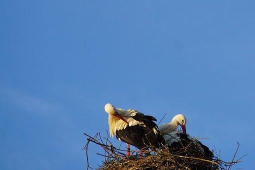 Stork, Nest, Stork Couple, Clean, Plumage, Bill, Red