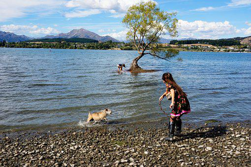 Wanaka, Lone Tree, New Zealand, People, Dog, Fetch