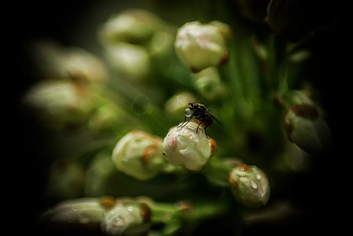 Fly, Drop, Plants, Nature, Insect, Drops, Wet, Insects