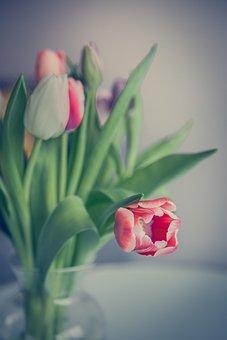 Tulip, Flowers, Tulips, Spring, Nature, Flower, Summer