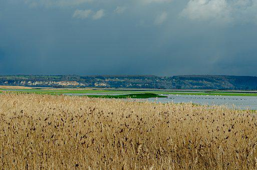 France, Landscape, Reed Bed, Reed, Estuary, Normandy