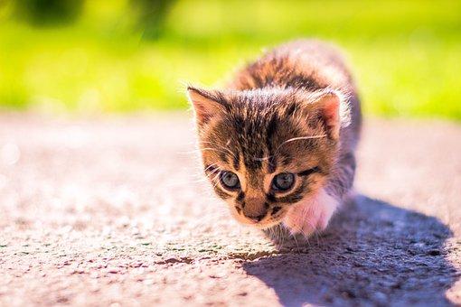 Cat, Pet, Small, Kitten, Portrait, Friendship, Cute