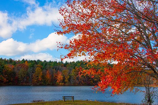 New England, Foliage, Lake, Fall, Nature, Autumn