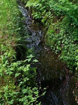 River, Bach, Water, Nature, Landscape, Creek, Flowing