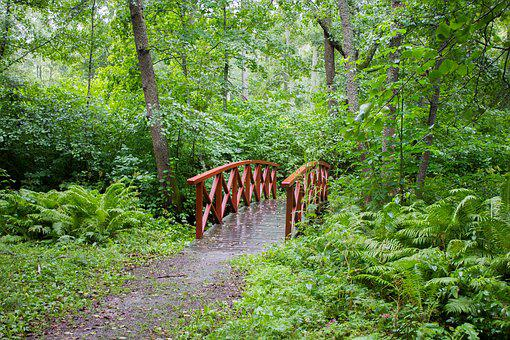 Bridge, Red, Green, Nature, Landscape, Trees, Forest