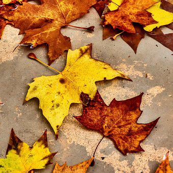 Leaves, Fallen, Dead, Autumn, Foliage, Yellow, Brown