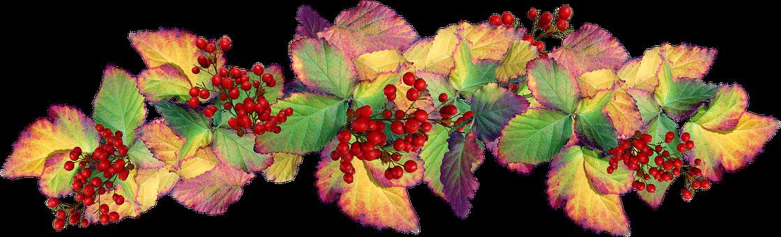 Leaves, Autumn, Berries, Garden, Nature