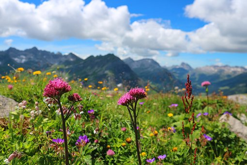 Alpine Flowers, Austria, Lech, Bloom, Alpine