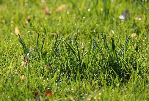 Blades Of Grass, Fresh, Morgentau, Rush, Meadow, Grass