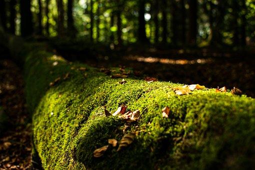 Moss, Log, Forest, Green, Nature, Autumn, Wood, Tree