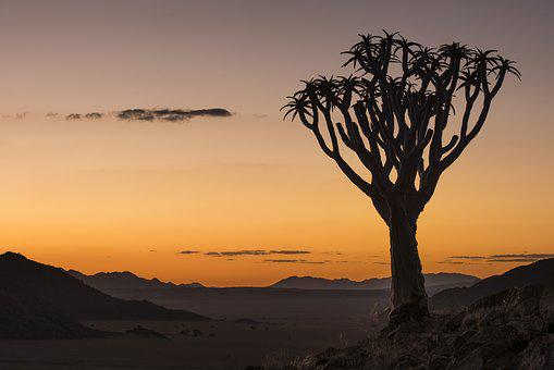 Sunset, Quiver Tree, Namibia, Africa, Nature, Landscape
