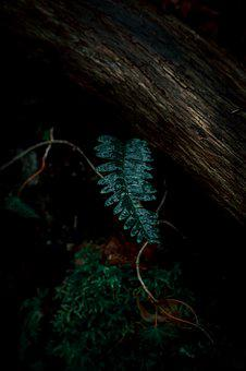Natural World, Texture, Nature, Leaf, Plant, Green