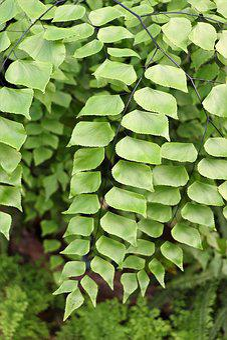 Leaves, Sheet, Green, Tree, Ecology, Foliage, Nature