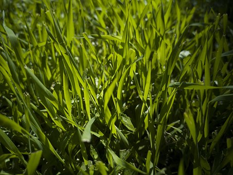 Grass, Green, Field, Area, Nature, Chan, Plant