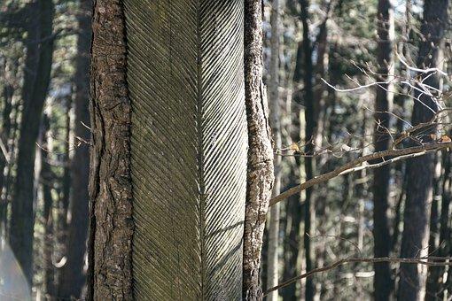 Resin Harvesting, Nature, Tree, Woods, Autumn, Old
