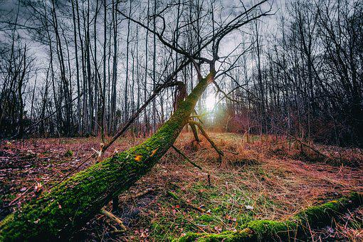 Early Spring, Forest, Nature, Park, Meadow, Tree