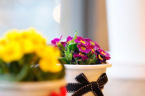 Flowers, Potted Plant, Spring, Seasonal, Props