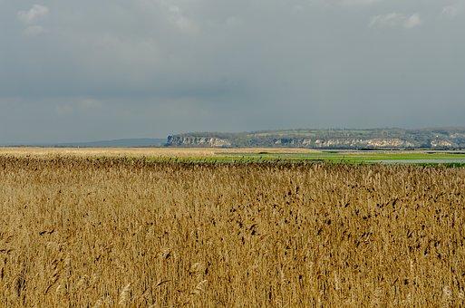 France, Landscape, Reed Bed, Reed, Estuary, Normandy