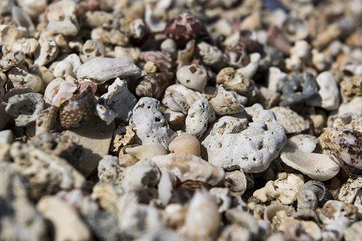 Shells, Rocks, Stones, Sand, Sea